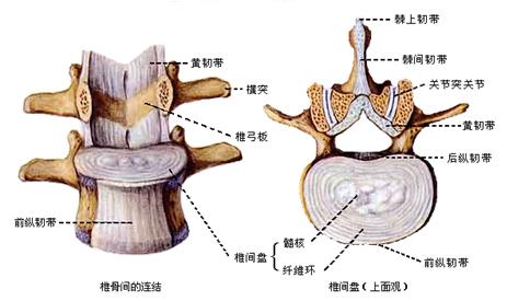 :三关节复合体解剖结构-好医生继续医学教育中心