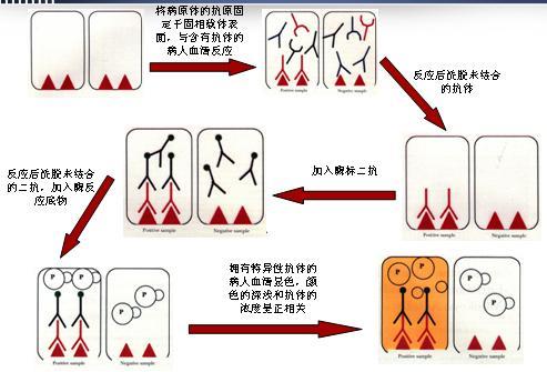 (三)elisa间接法的实验过程